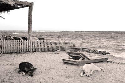 black & white dreams