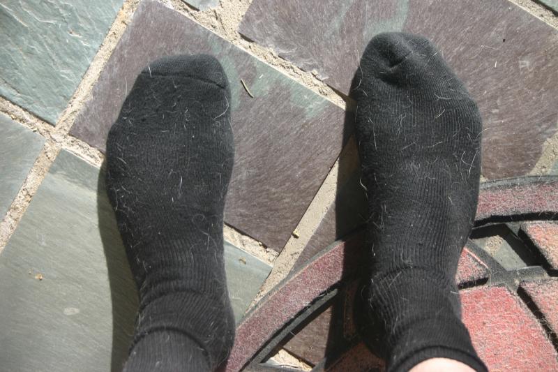 Dog hair on black socks