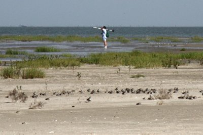 Melvin Weber with sleeping Dunlin in foreground.