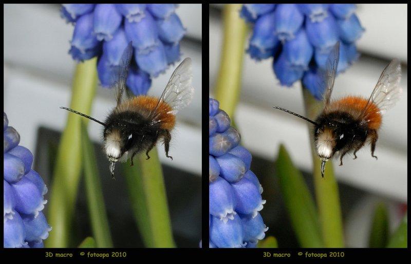 fotoopa D323128
