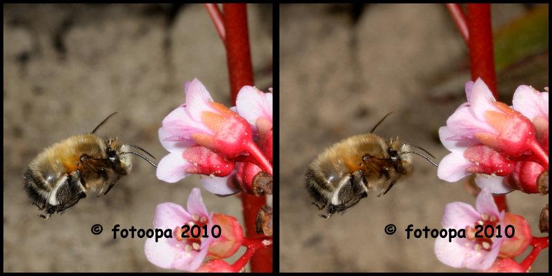 fotoopa 20100411_0056