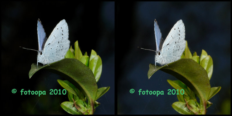 fotoopa 20100415_0282