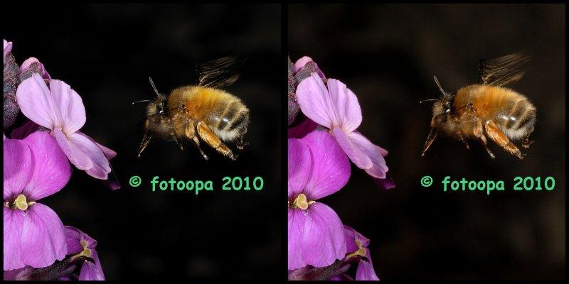 fotoopa 20100417_0436