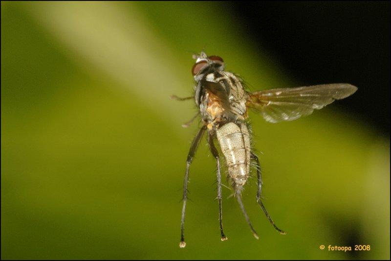 fly_17121
