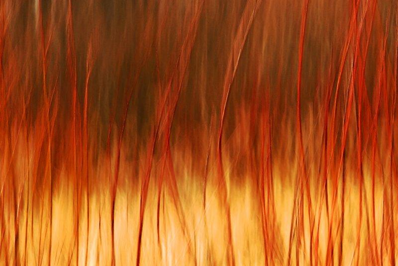 Burning Bush 1