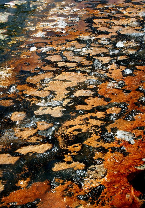 Bacteria Beds - Yellowstone NP