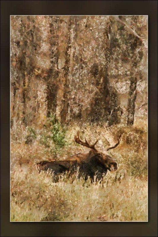 moose-1.jpg