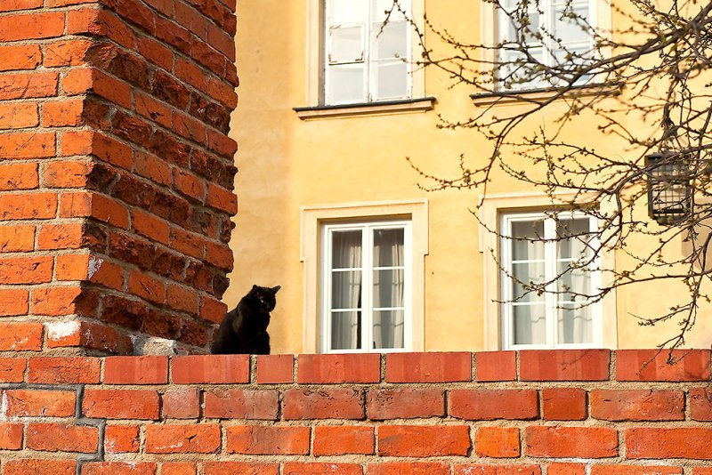 Old Town Resident