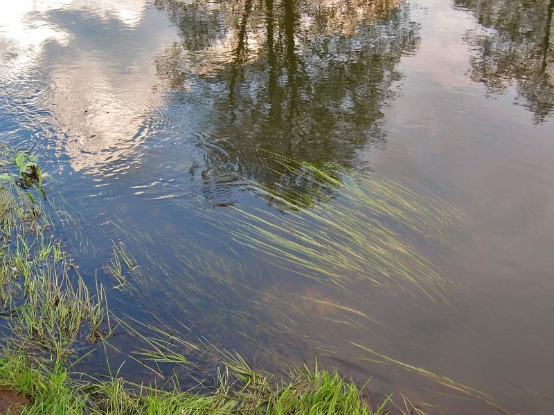 Tree, Cloud, Grass, Water