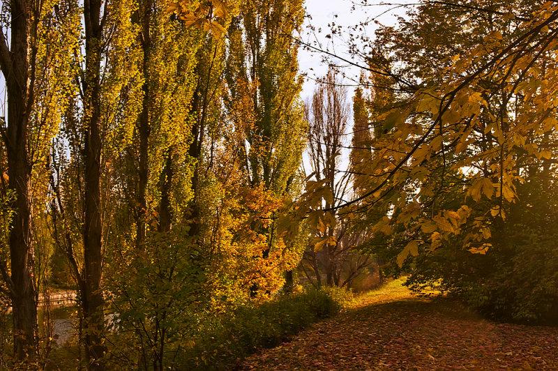 Walking On Autumn Leaves
