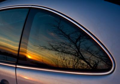Sunset Tree Mirrored