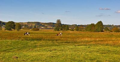 Landscape Near Zurawnica