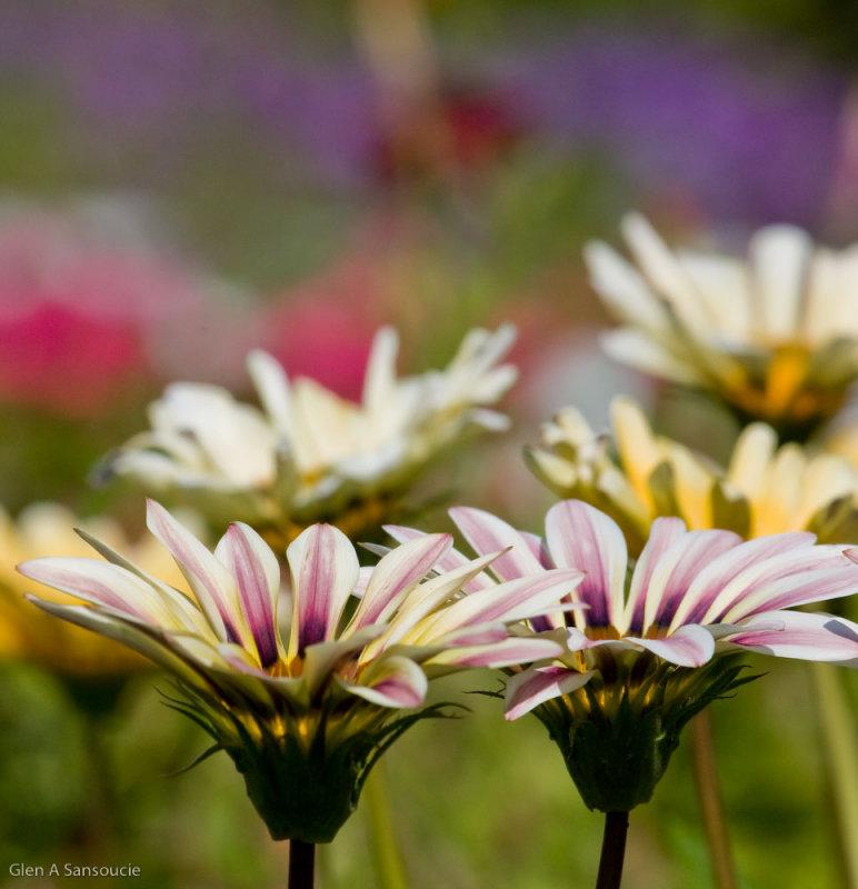 Prescott Park Floral - Day 2