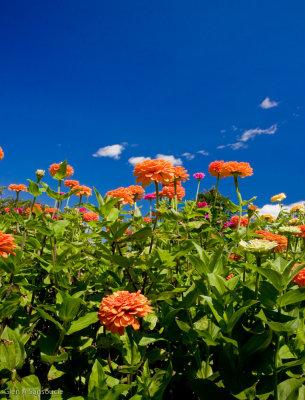 Prescott Park Floral
