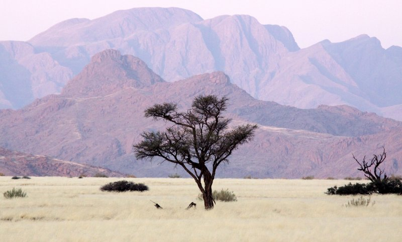 SOSSUSVLEI, NAMIB NAUKLUFT NATIONAL PARK, NAMIBIA (41).JPG