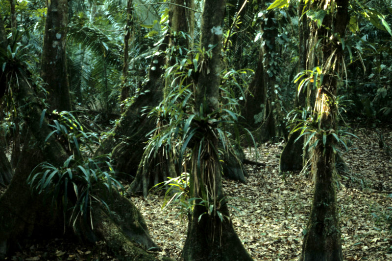 ECUADOR - AMAZONA - RAINFOREST INTERIOR B.jpg