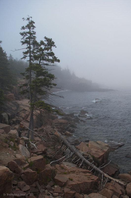 Near thunder hole.jpg