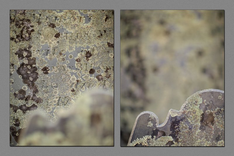 November : Barnstable Cemetery Lichen on Headstones