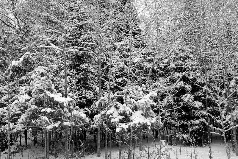 Fresh Snow 1