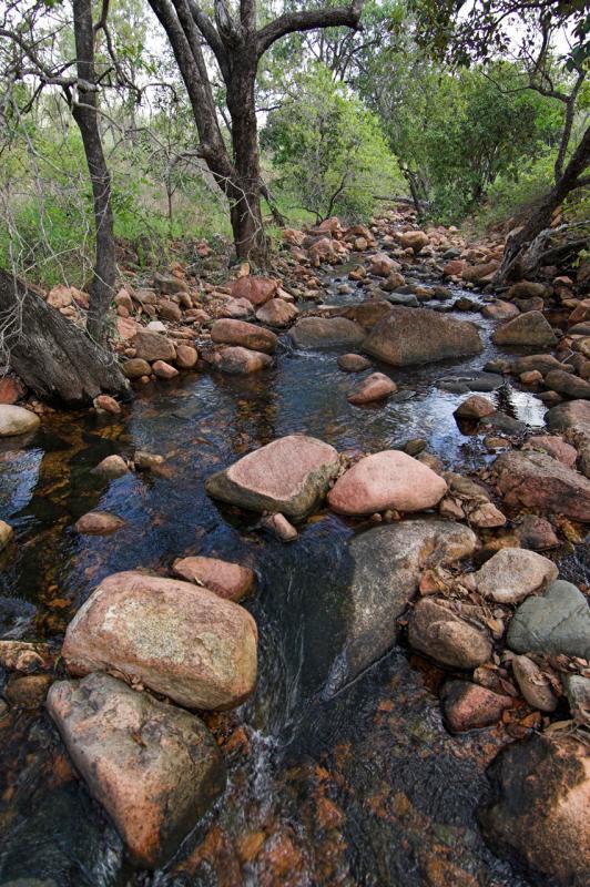 Lovely habitat for freshwater animals _DSC3430