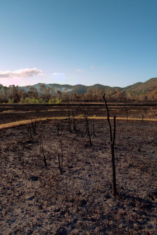 After the bushfire R0011992