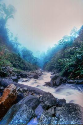 Rainforest stream with heavy mist 71706