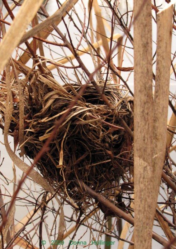Blackbird Nest in the Cattails
