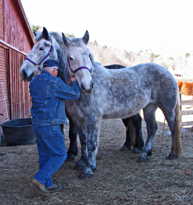 Earl and the New  Percherons