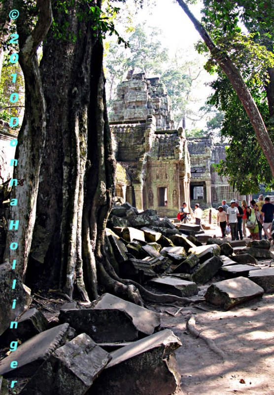 TA Prohm Temple with Stones