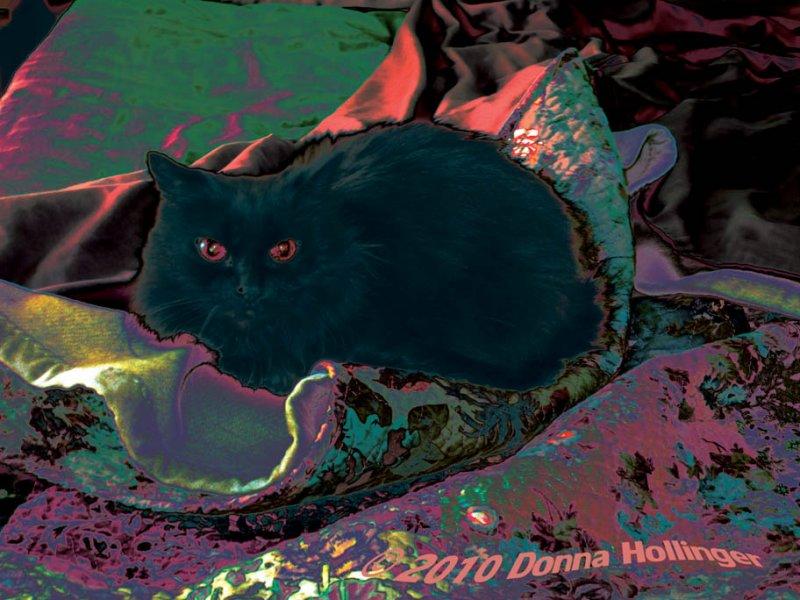 Surrealistic Kitty