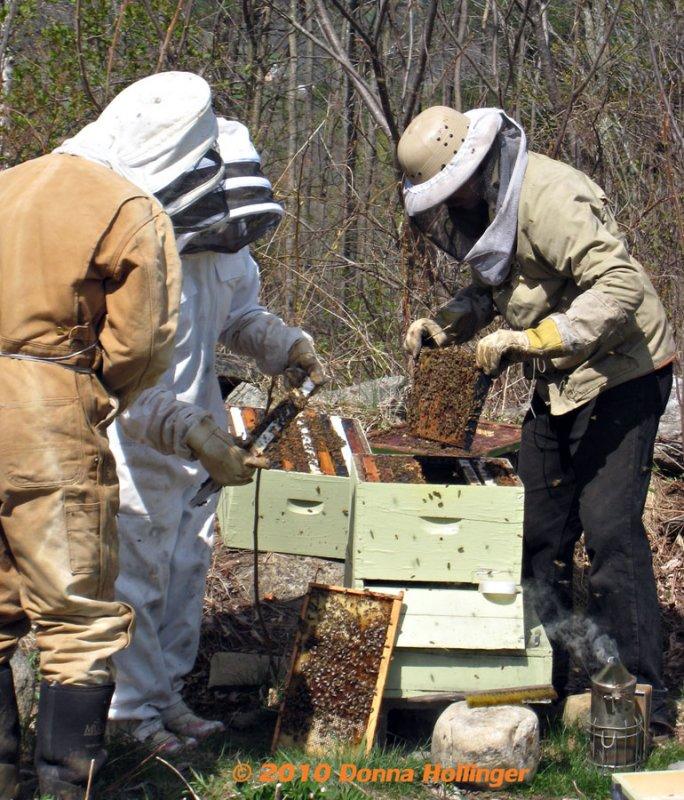 Beekeeping in Strafford
