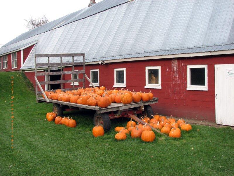 Pumpkins at Hurricane Flats