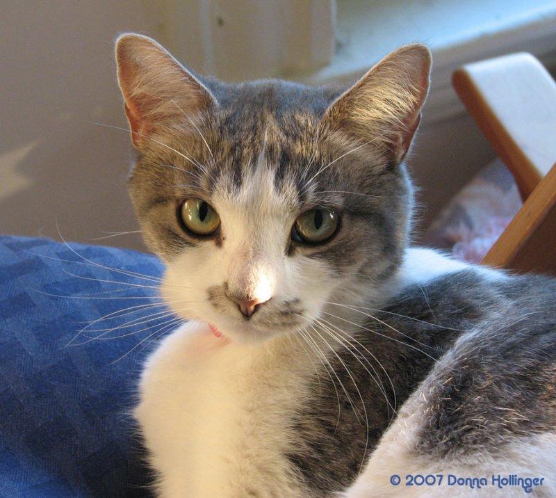 Lovely Rita Kitty
