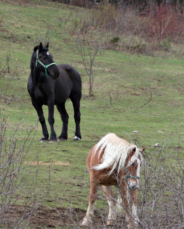 Two horses waiting