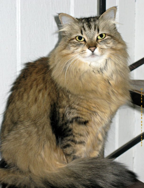 Annis Kitty Poco