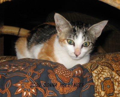 Krisna's Kitty