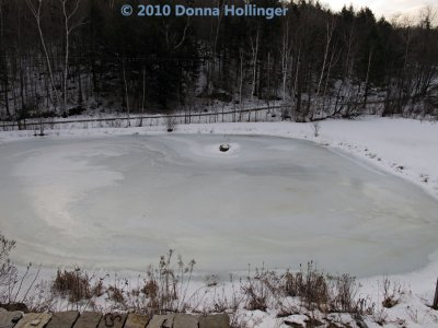 The Pond is Icing Up
