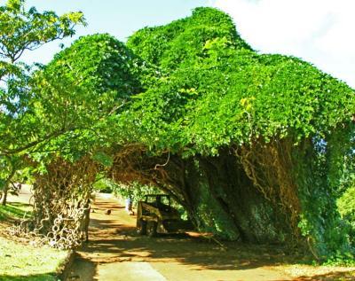A velvet canopy