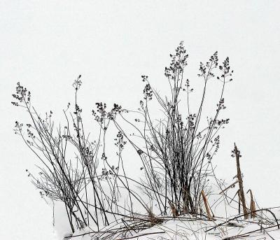 Stalks and Snow