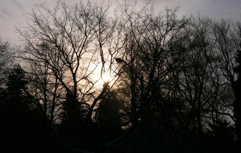 Early morning light.....
