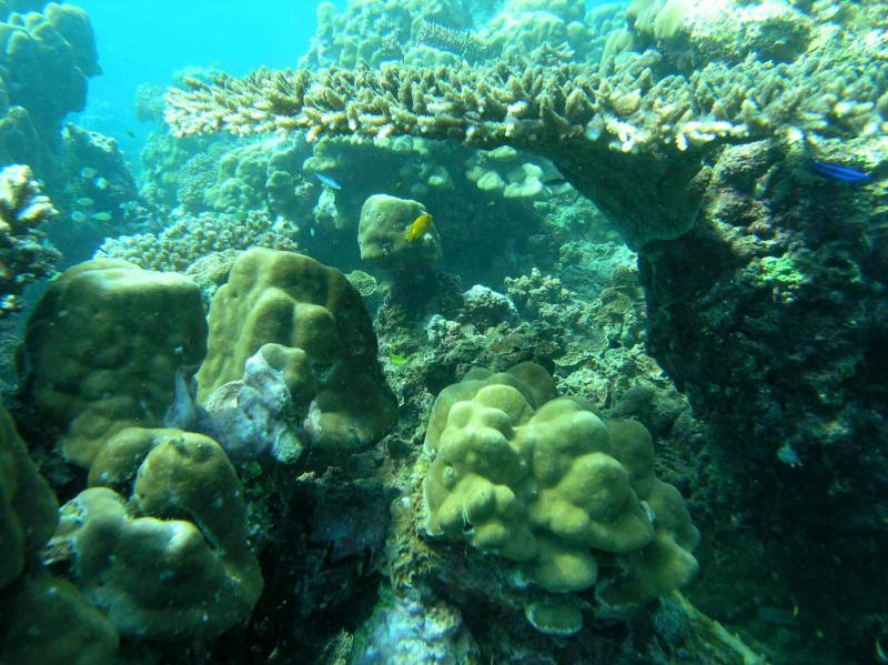 corail2.jpg