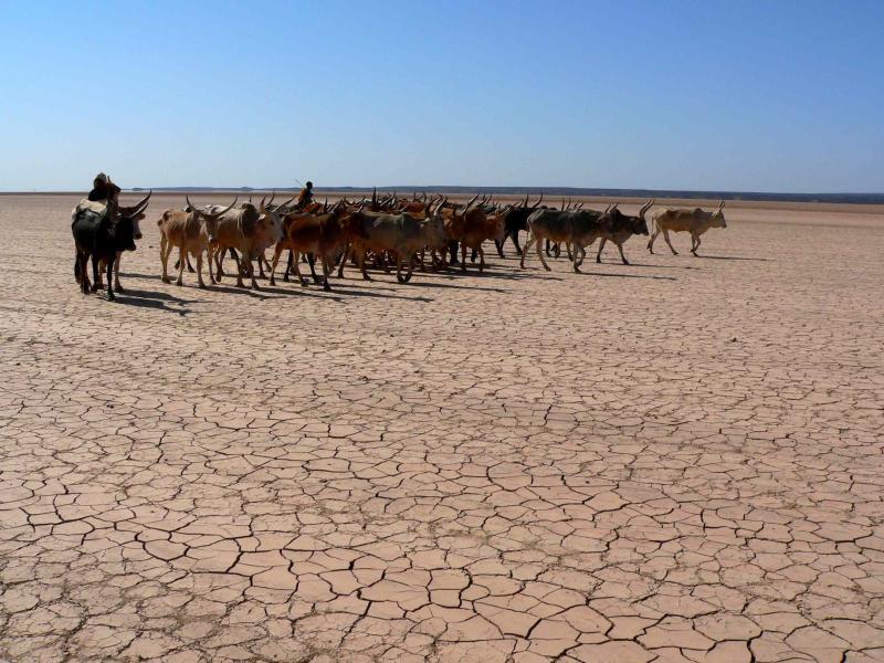 troupeau de nomade.jpg