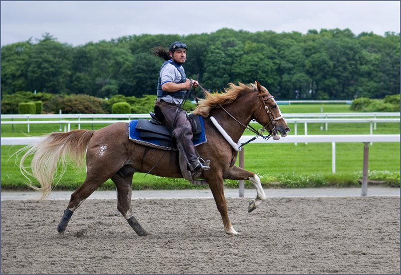 Belmont Park Racetrack, two pony-tails