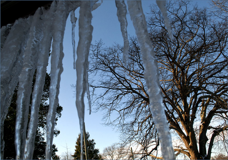 Winter on Long Island, Dec. 2009