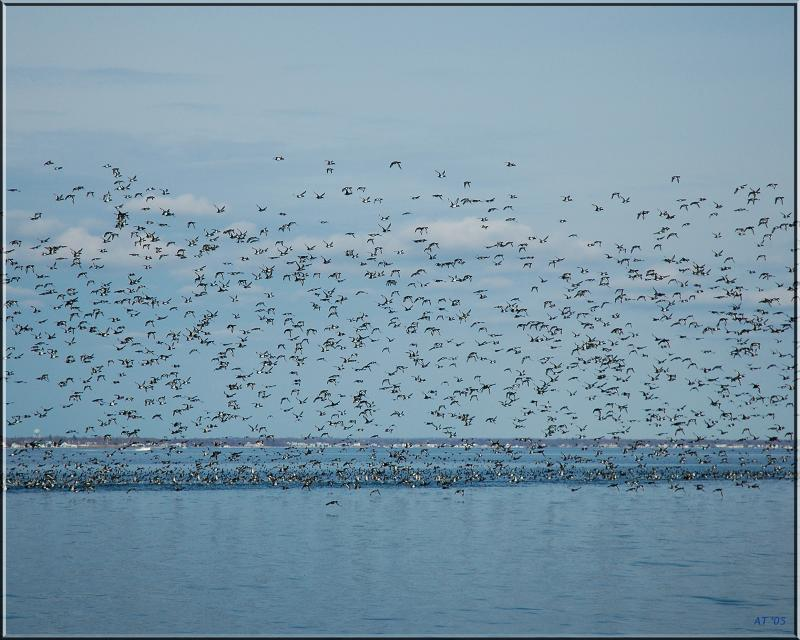 Birds on the bay