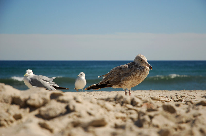 three gulls at the beach