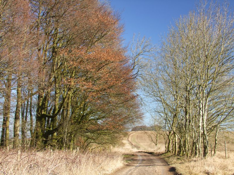 Looking  east  along  The  Ridgeway .