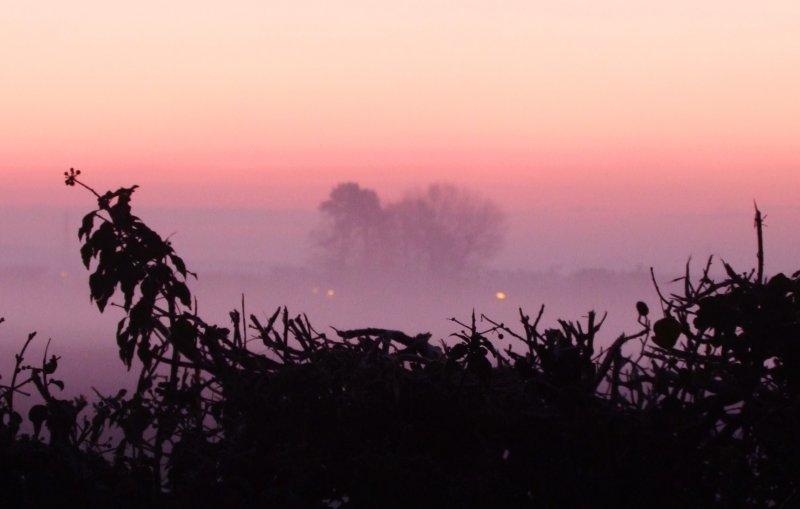 Misty  dawn  oer  a  hedgerow.