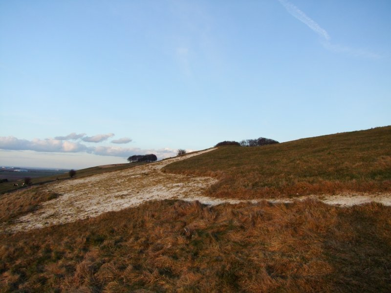 Looking  north  east  across  the  white  horse.