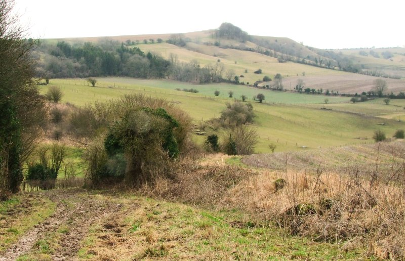 Looking  south  from  the  Roman  Road  to  Kings  Play  Hill.